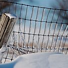 Fence After Blizzard by H A Waring Johnson