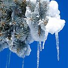 Icicles Galore by H A Waring Johnson