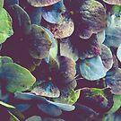 Hydrangea Botanical 1 by OLIVIA JOY STCLAIRE