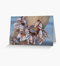 Goose Barnacles On Driftwood Greeting Card