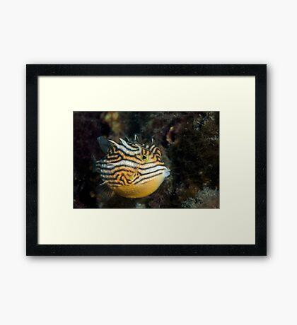 Yellow submarine  Framed Print