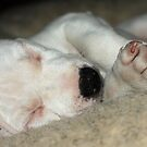 Let sleeping dogs lie! by LisaRoberts