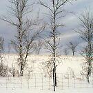 The Fence ! by Elfriede Fulda