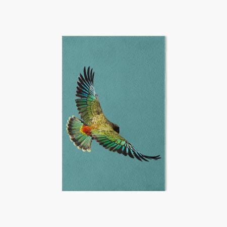 New Zealand Kea Art Board Print