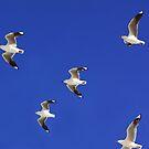 Coast Gulls by ShotsOfLove