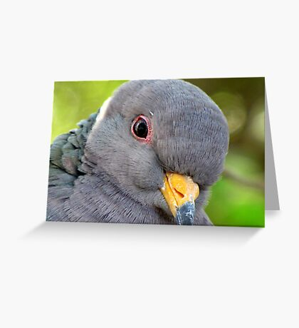 "Band-tailed ""Cutie Pie"" Pigeon Greeting Card"