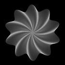 Polar Flower V by Rupert Russell