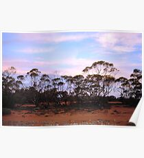 Turlee Station sunset pink clouds Poster
