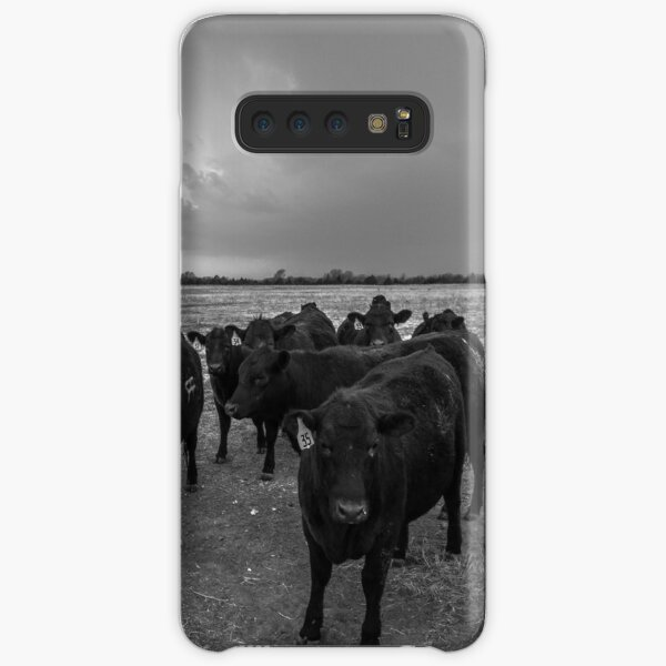 Hanging Out - Angus Cattle Hang Out with Photographer as Storm Brews in Kansas Samsung Galaxy Snap Case