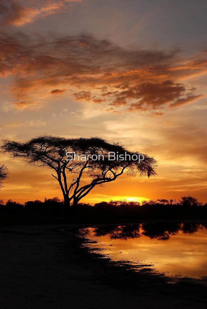 Okavango Delta sunset by Sharon Bishop