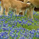 Baby's and Bluebonnetts by Janice Crayton