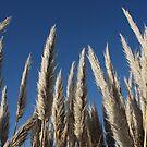 Grass Reeds-Clacton coastline by fandangle-art