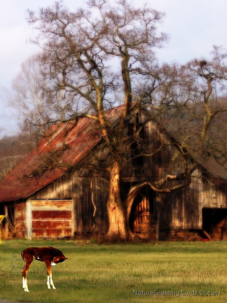 Old Barn, and Spooky Tree, & The New Spring Foal by NatureGreeting Cards ©ccwri