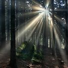 morning forest by dagmar luhring