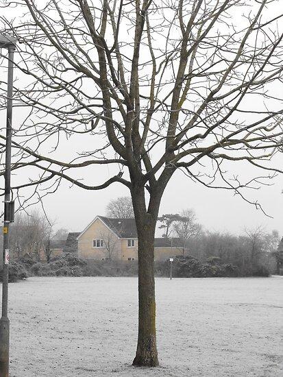 Wacky Tree by miami17