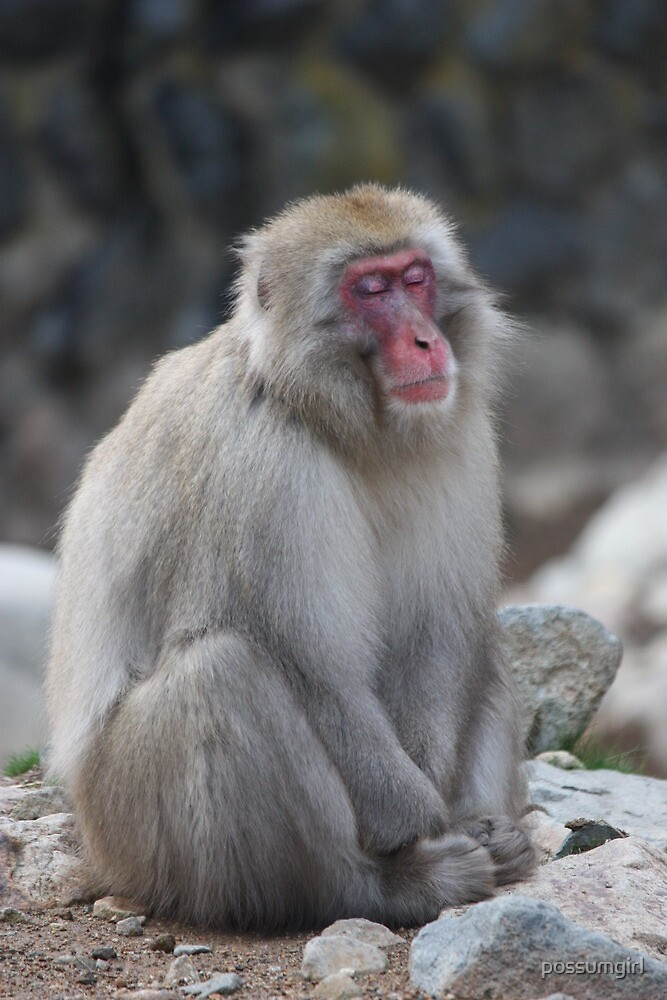 Zen monkey by possumgirl