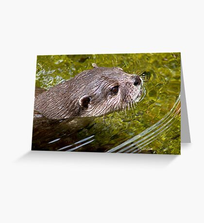 Ring of Bright Water Greeting Card