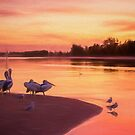 Pelicans on the Shore.... by Tracie Louise