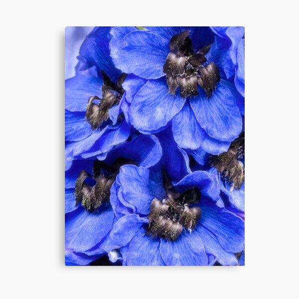 Love is blue Canvas Print