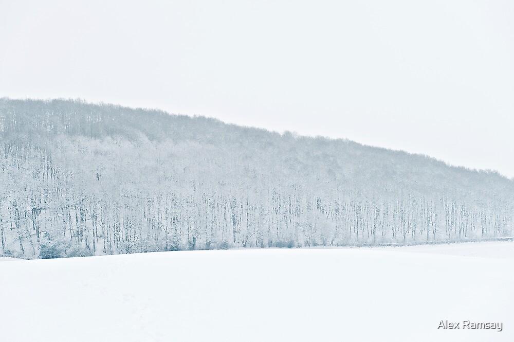 Frith Wood, Presteigne by Alex Ramsay