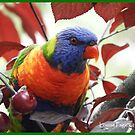 Australian Rainbow Lorikeet by Louise Page
