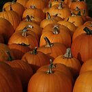 The pumpkins by jayant