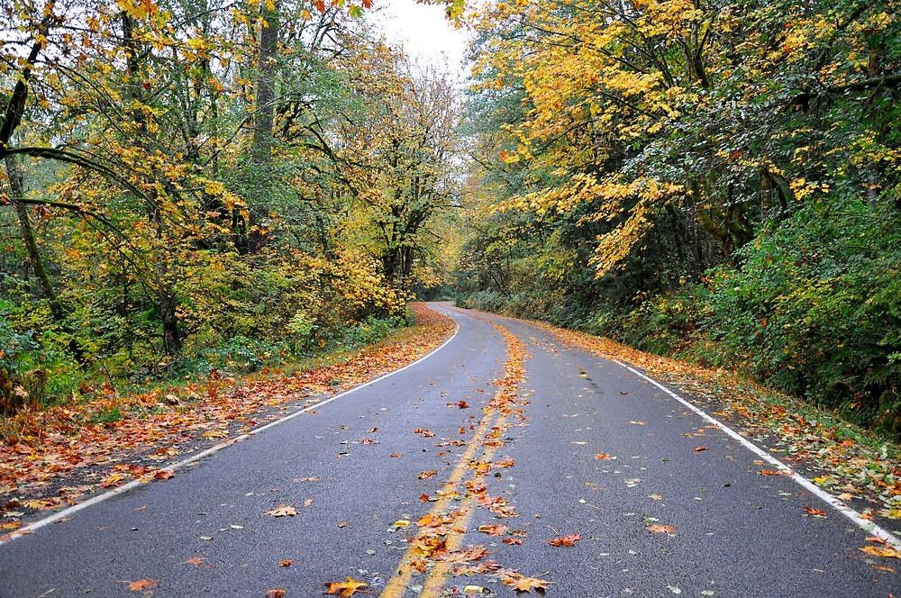 Fall Road by DiamondCactus