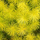 Fascinating Bottlebrush Grasses by Georgia Mizuleva