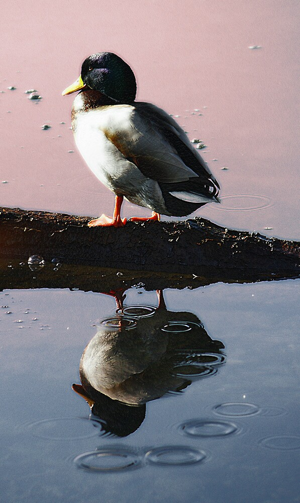 I' ll be your mirror by Stefano  De Rosa
