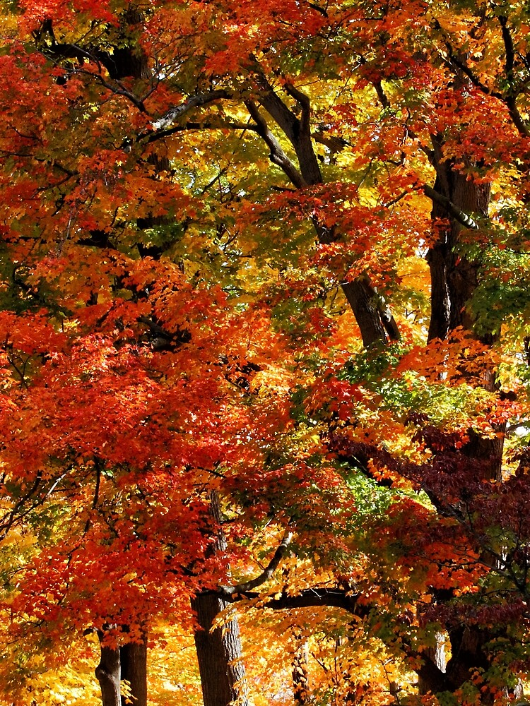 Colors Of Fall by wselander