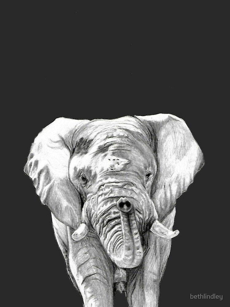 African Elephant in Graphite by bethlindley