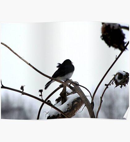 Watching Winter Poster