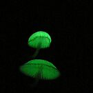More Glowing Mycena  by Erin Anderson