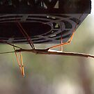Stick Insect No. 2 by Maryanne Lawrence