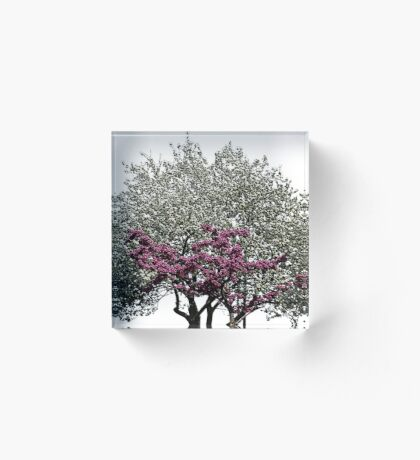 Heart Tree Acrylic Block