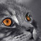 Orange by Susanne Correa