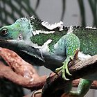 Fijian Crested Iguana by kirstybush