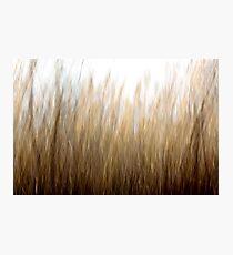 Tall Grass Photographic Print
