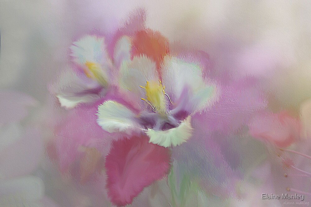 A Summer Day by Elaine Manley