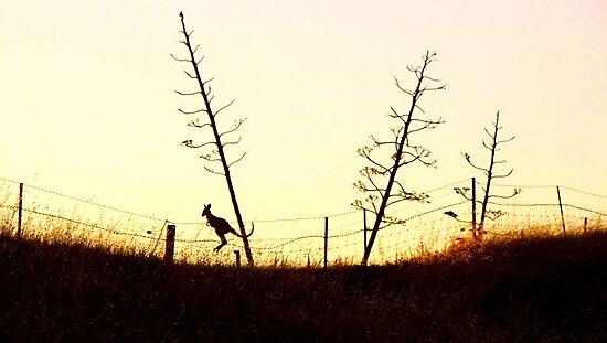 Hopping towards the setting sun by Enivea