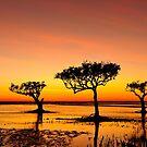 Mangrove sunrise by Colin White