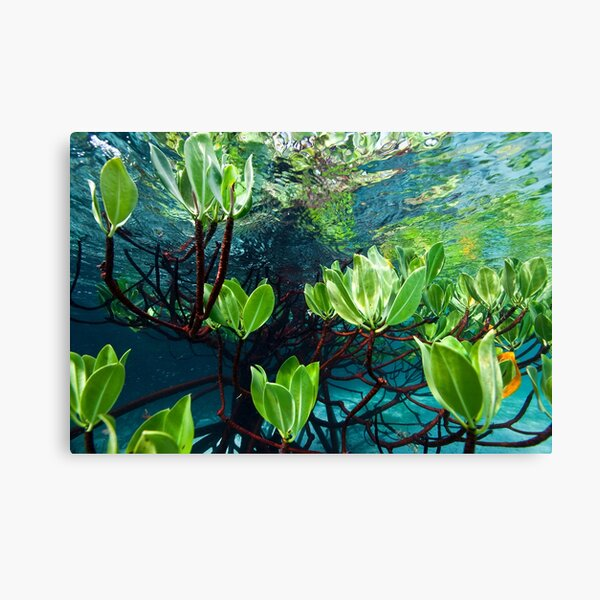 Leafy reflections Canvas Print