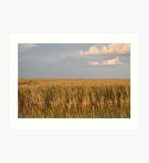 Goldene Farbe des Sawgrass Kunstdruck