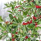 Winter Holly  by Southern  Departure