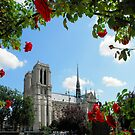 A Red Rose for the Lady - Notre Dame by Marita Sutherlin