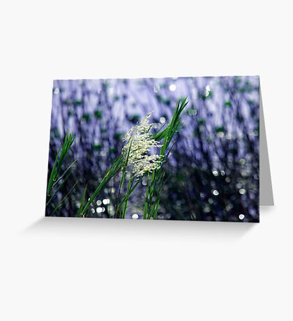 Starry, starry lights Greeting Card