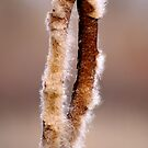 Cattail #3 by Betsy  Seeton