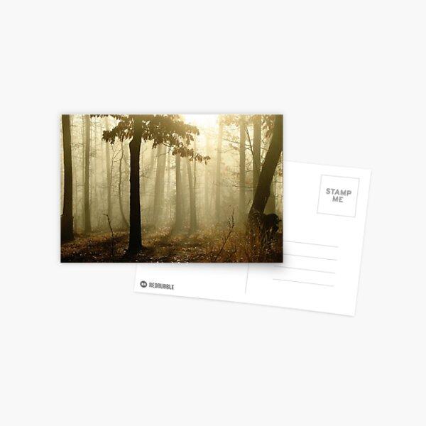Golden Foggy Forest Postcard