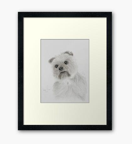 Sheba Framed Print