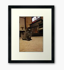 Bella is Playing Framed Print